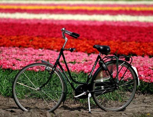 Un campo di fiori in Olanda