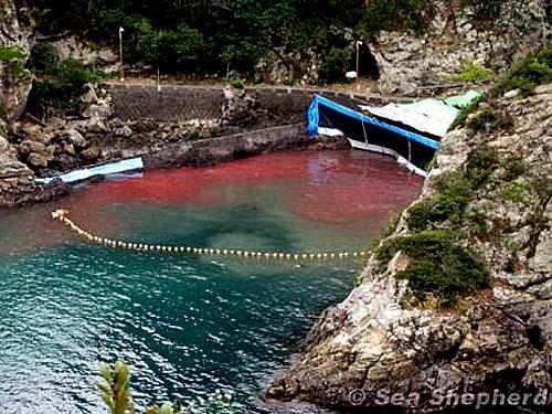 uccisione dei delfini nella baia di Taiji