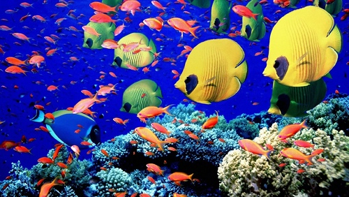 giornatamondiale-degli-oceani3-2012