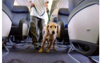 cani-e-gatti-diventano-frequent-flyer
