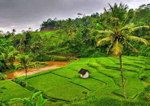indonesiagiavarisaie