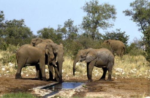 Namibiaelefanti 3