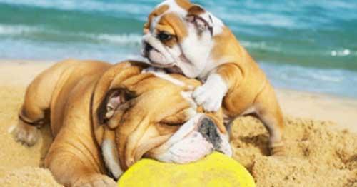 cane-spiaggia-348-2