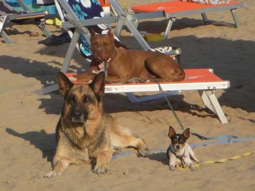cani-spiaggia640x480