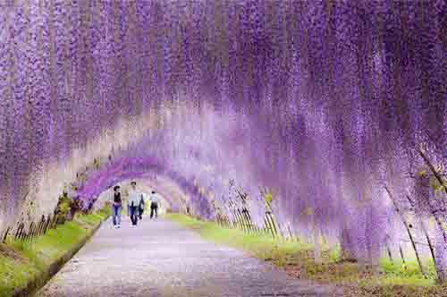 awachi-fuji-gardens-giappone