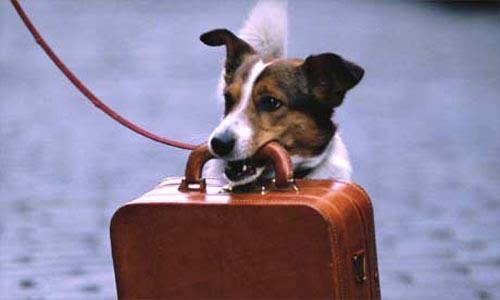 cane-valigia.homejpg
