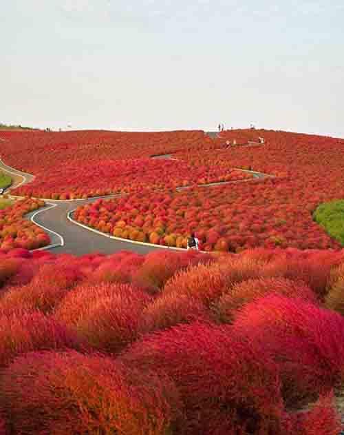 hitachi-seaside-park-giappone