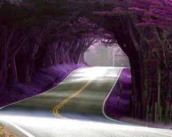 tunnel-di-alberi-in-portogallo