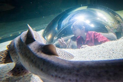 Aquarium-of-Canada4