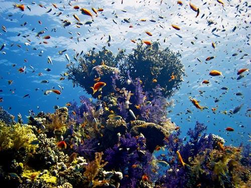 egitto Sharm el Sheikh mar rosso