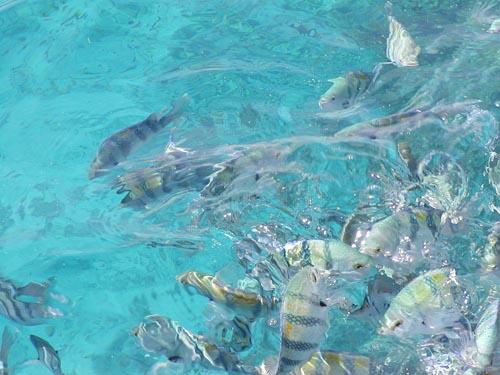 egitto pesci