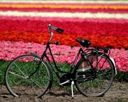 tulipani homeuna-bicicletta-davanti-a-un-campo-di-tulipani