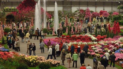 Olanda Floralien 3-48-12453