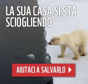 ora della terra orso polare banner