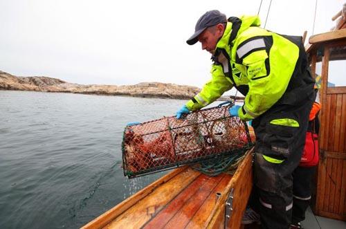 svezia cucina Pesca-a-Grebbestad-Svezia-
