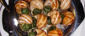 sagra lumache