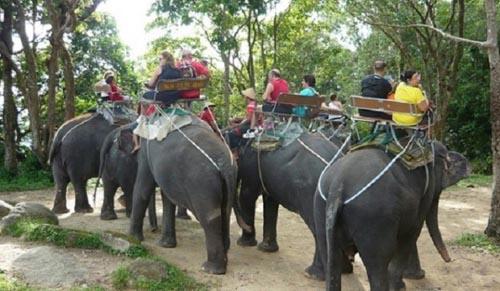 trasporto elefante
