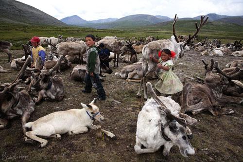 Mongolia-Tstaatan-reindeer-children-herders