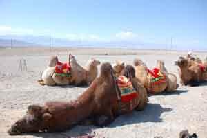 mongolia deserto-del-gobi 155650