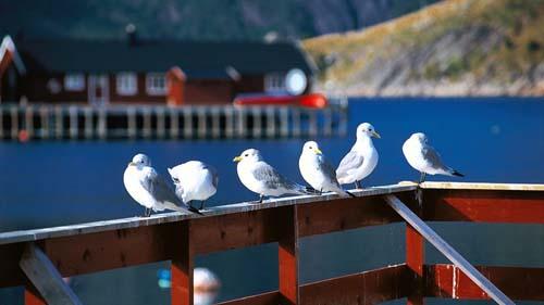 nordland isola2