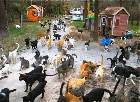 gatti 1.isola