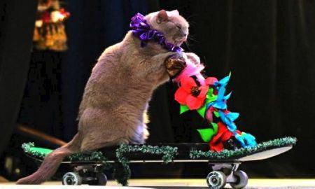 gatti 2.circo