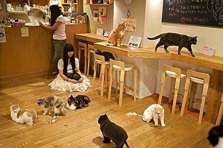 gatti 5.cat cafe