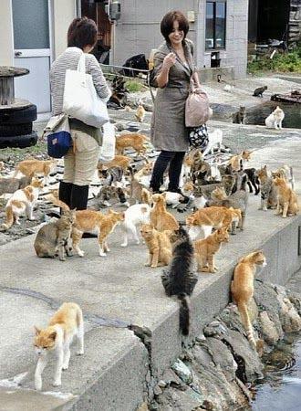 gatti cat-island