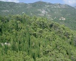 opodo home montenegro verde debelj-5933392