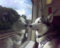 cuccioli cane-in-treno