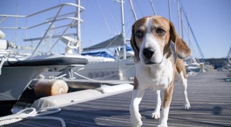 cuccioli nave-cane