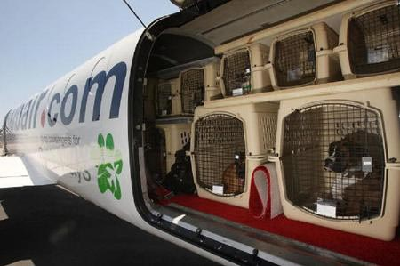 cuccioli viaggiare-in-aereo-con-cani-di-grossa-taglia-consigli-e-istruzioni cf8d0cfeb4fc4b547f33a83724a7d36c