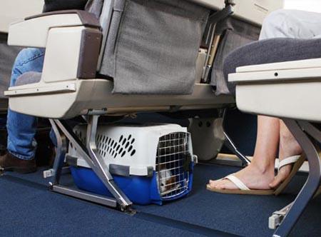 cucciolidog-in-carrier-on-plane