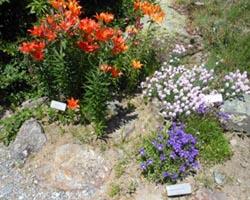 gran paradiso giardino-botanico-alpino