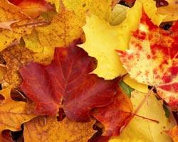 Foglie autunno-1200x520