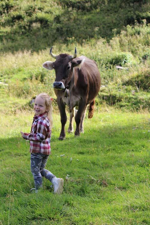 foto bimba e mucca