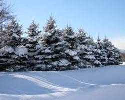 hokkaido-inverno-1 2738746
