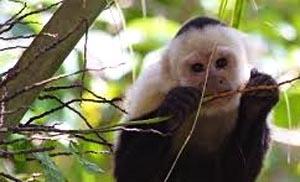 scimmie1