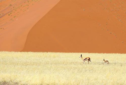 deserti 12 namibia-namib-naukluft-national-park-desert-484898831