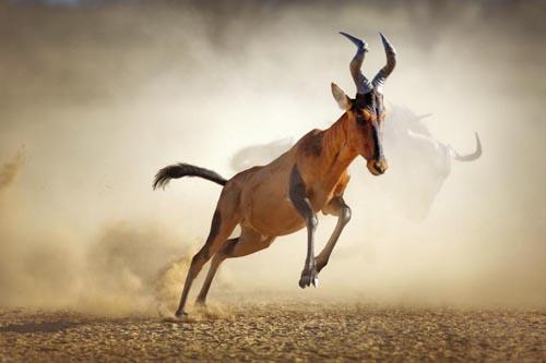 deserti 3 africa-kalahari-desert-kalahari-gemsbok-national-park-175683926