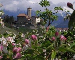 fiorituta CastelValerFiori